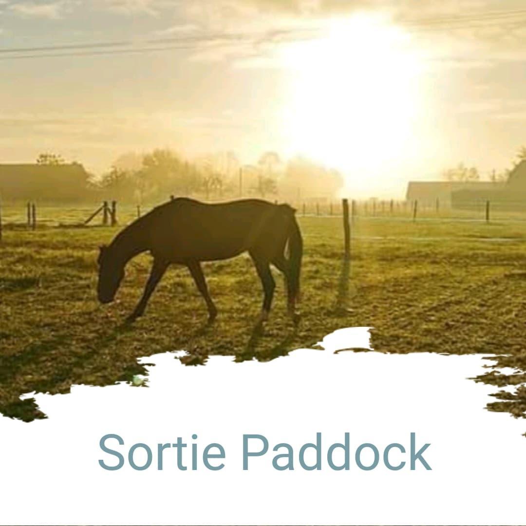 Sortie paddock
